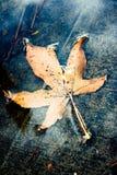 Gelbes Herbst-Blatt in einer Pfütze Stockbilder
