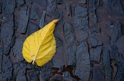 Gelbes Herbstblatt Stockfotografie