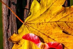 Gelbes Herbstblatt Lizenzfreies Stockfoto