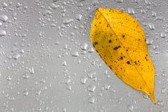 Gelbes Herbstblatt auf einer grauen Metalloberfläche mit Regentropfen Lizenzfreies Stockbild