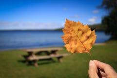 Gelbes Herbstblatt, das gegen die Barke eines Baums legt Stockfoto