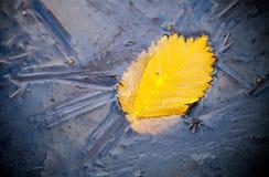 Gelbes Herbstblatt und -insekt eingefroren im Eis Stockfotografie