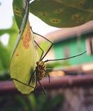 Gelbes Insekt Stockfotografie