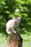 Gelbes Kätzchen auf einem Stumpf Lizenzfreie Stockfotos