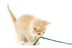 Gelbes Kätzchen, das auf Garn auf weißem Hintergrund zieht lizenzfreie stockfotos