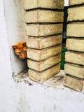 Gelbes Kätzchen mit den sehr großen Augen, schauend hinter den Spalten lizenzfreie stockfotos