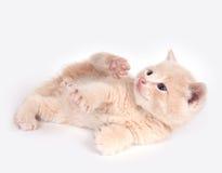 Gelbes Kätzchenspielen Lizenzfreie Stockfotografie