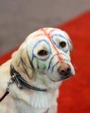 Gelbes Labrador mit gemaltem Gesicht Stockfotografie