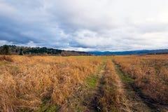 Gelbes langes Gras mit Straßenbahn auf großer Herbstwiese Lizenzfreies Stockbild