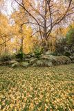 Gelbes Laub in einem Park im Herbst lizenzfreie stockfotos