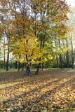 Gelbes Laub, Herbst stockfotos