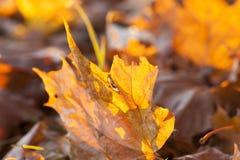 Gelbes Laub, Herbst lizenzfreie stockfotos