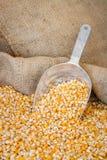Gelbes Maiskorn in einem Leinwandbeutel Stockfotos