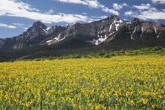 Gelbes Maultierohrfeld und San Juan Mountains, Hastings MESA, nahe letzter Dollar-Ranch, Ridgway, Colorado, USA Lizenzfreie Stockfotos