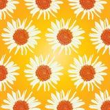 Gelbes Muster der Sonnenblume Lizenzfreies Stockbild