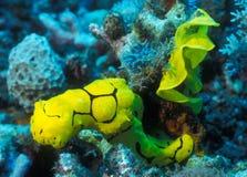 Gelbes Nudibranch und Ei-Farbband Stockbilder