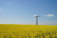 Gelbes Rapsfeld und Hochspannungsleitungen lizenzfreies stockbild