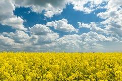 Gelbes Rapssamenfeld und blauer Himmel, eine schöne Frühlingslandschaft Lizenzfreie Stockbilder