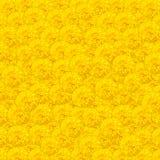 Gelbes Ringelblumenblumenmuster als Hintergrund Stockbilder