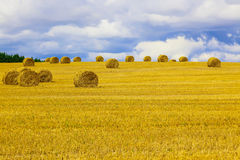 Gelbes rundes Straw Bales auf Stoppel-Feld Stockbilder