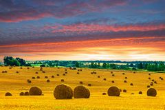 Gelbes rundes Straw Bales auf Stoppel-Feld Lizenzfreie Stockfotos