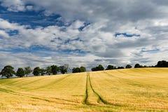Gelbes Schottland-Feld Lizenzfreie Stockfotos