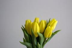 Gelbes Tulpenblühen Stockbilder