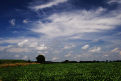 Gelbes und grünes Feld Lizenzfreie Stockfotografie