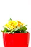 Gelbes Veilchen 2 Stockfotografie