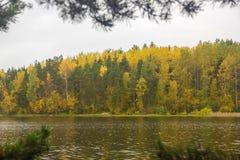 Gelbgrün Autumn Forest Backdrop Ladoga Lake Karelia Russland stockbild