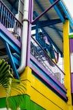 Gelbgrün und Purpur Stockfoto