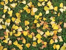 Gelbgrüne Herbstwolldecke Stockbilder