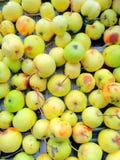 Gelbgrüner Apfelhintergrund lizenzfreies stockfoto