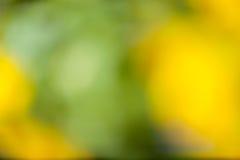 Gelbgrüner Hintergrund Stockfotos