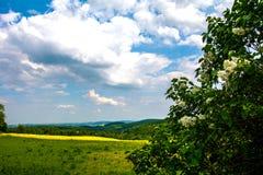 Gelbgrünfelder Stockbild