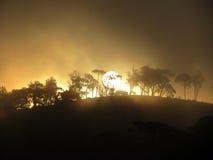 Gelborange Sonne im Wald lizenzfreies stockfoto