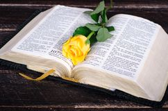 Gelbrose auf eine alte Bibel Stockbilder