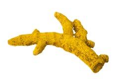 Gelbwurz-Wurzel lizenzfreies stockfoto