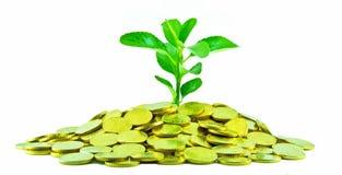 Geld-Anlage Stockfoto