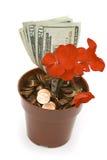Geld-Anlage in der Blüte Lizenzfreies Stockbild