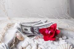 Geld auf Sand mit roter Blume und Muscheln stockbild