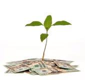 Geld-Baum Stockfoto
