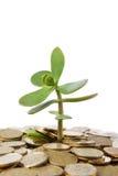 Geld-Baum Stockfotos