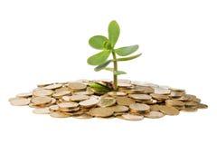 Geld-Baum, der von einem Stapel der Münzen wächst. Lizenzfreie Stockbilder