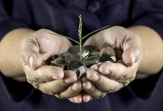 Geld, das auf Münzen weil Sorgfalt mit zwei Händen wächst Stockfotografie