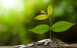 Geld en het kweken van bedrijfsconcept Stock Afbeelding
