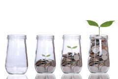 Geld het Groeien met boom groeiend concept Royalty-vrije Stock Afbeeldingen