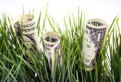 Geld im grünen Gras Stockbild