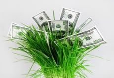 Geld im Gras Lizenzfreie Stockbilder