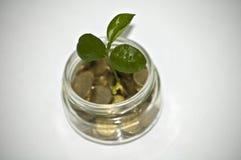 Geld in kruik Installatie het Groeien in Besparingenmuntstukken - Investering en Renteconcept Stock Foto